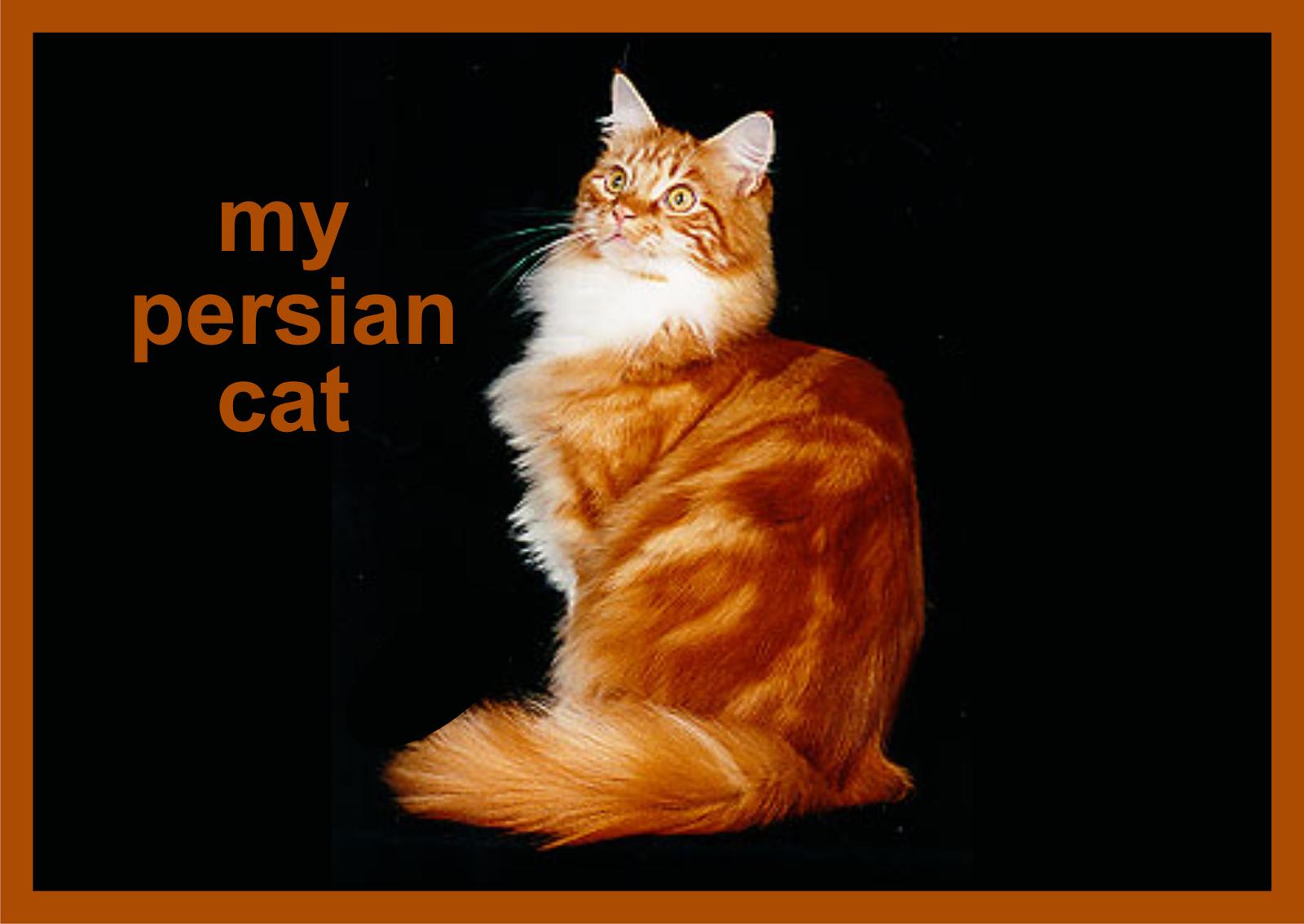 Descriptive Text About Animal Dan Artinya Englishiana