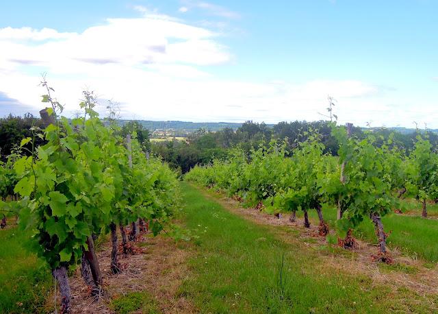 france vineyard