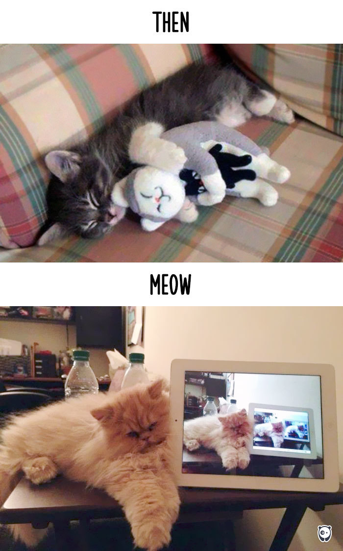 Then vs Meow How Technology Has Changed Cats' Lives (10+ Pics) - Catception