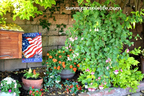 July 4th flag, fuschia, chicken feeder planter