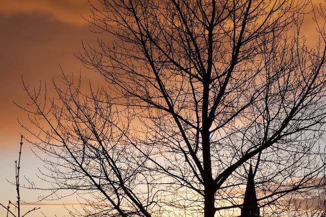 motiv: tree and sky