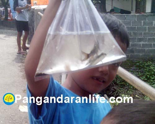 ikan yang punya imej buruk di Pangandaran