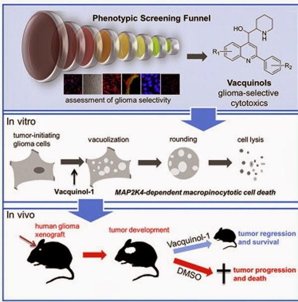 """Σπουδαία ιατρική ανακάλυψη; Σταμάτησαν την ανάπτυξη των όγκων """"ανατινάζοντας"""" τα καρκινικά κύτταρα!"""