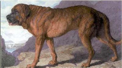 Historia raza Bullmastif