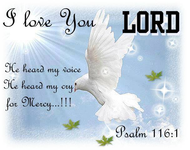 I love you LORD: He heard my voice