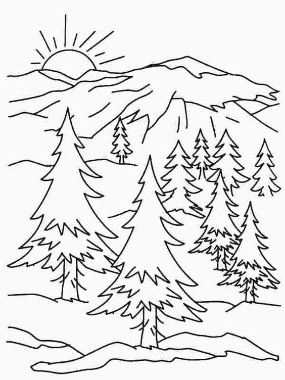 Tranh tô màu phong cảnh rừng thông