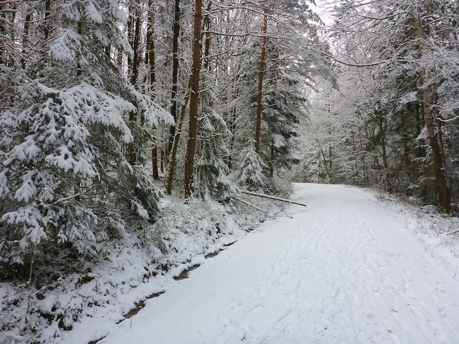 Лесная, дорога, зима, снег