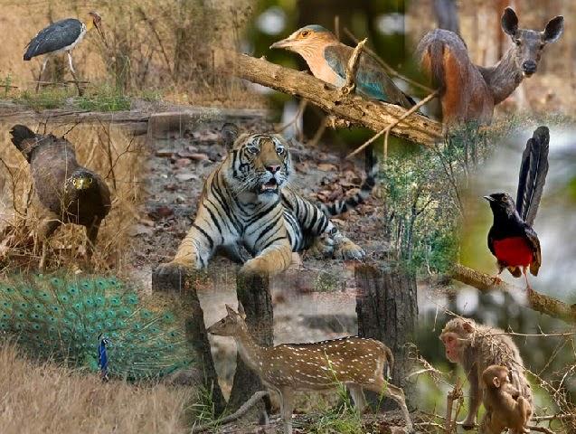 Bandhavgarh National Park,Madhya Pradesh