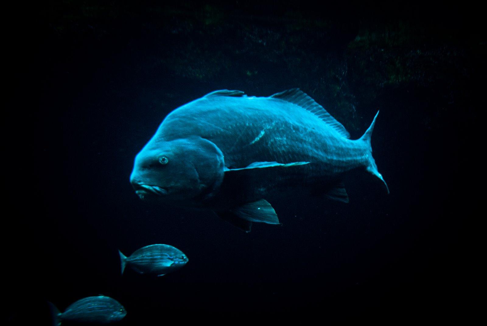 Kolos - Photo Entertainment: NY - Coney Island aquarium