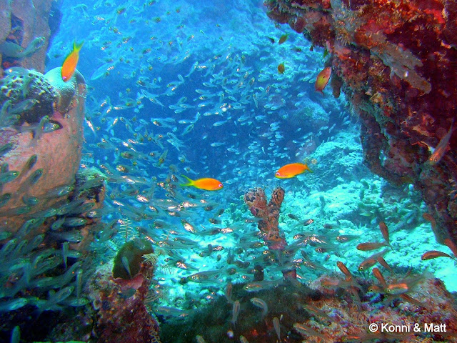 soldierfish, maldives, indian ocean, tropical reef