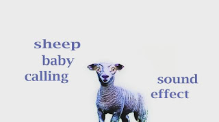 learn lamb sounds
