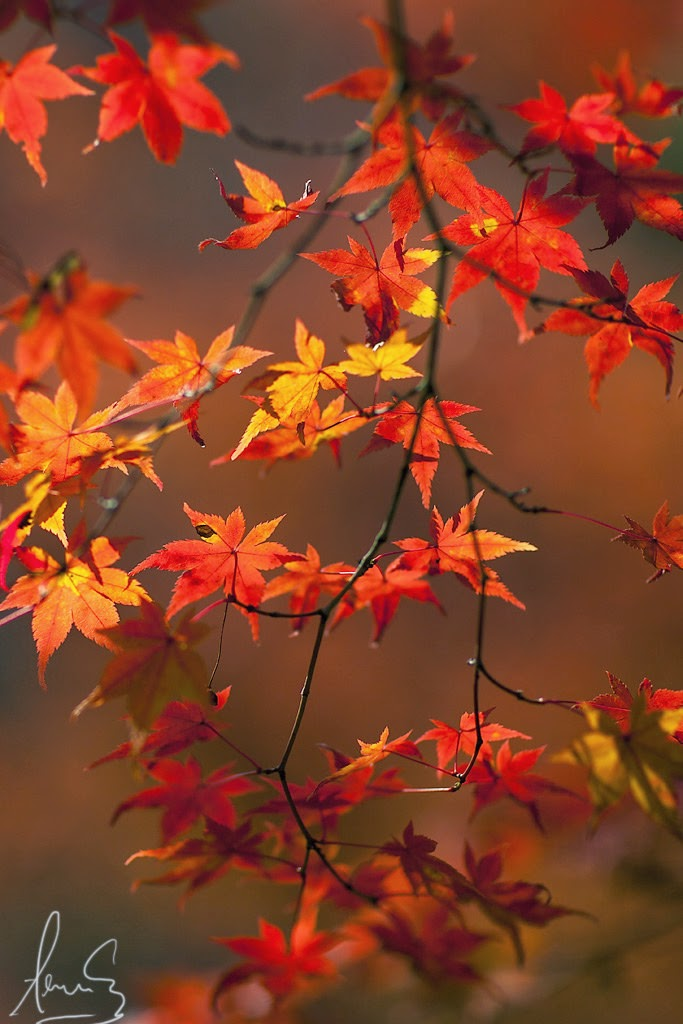 To Autumn by John Keats
