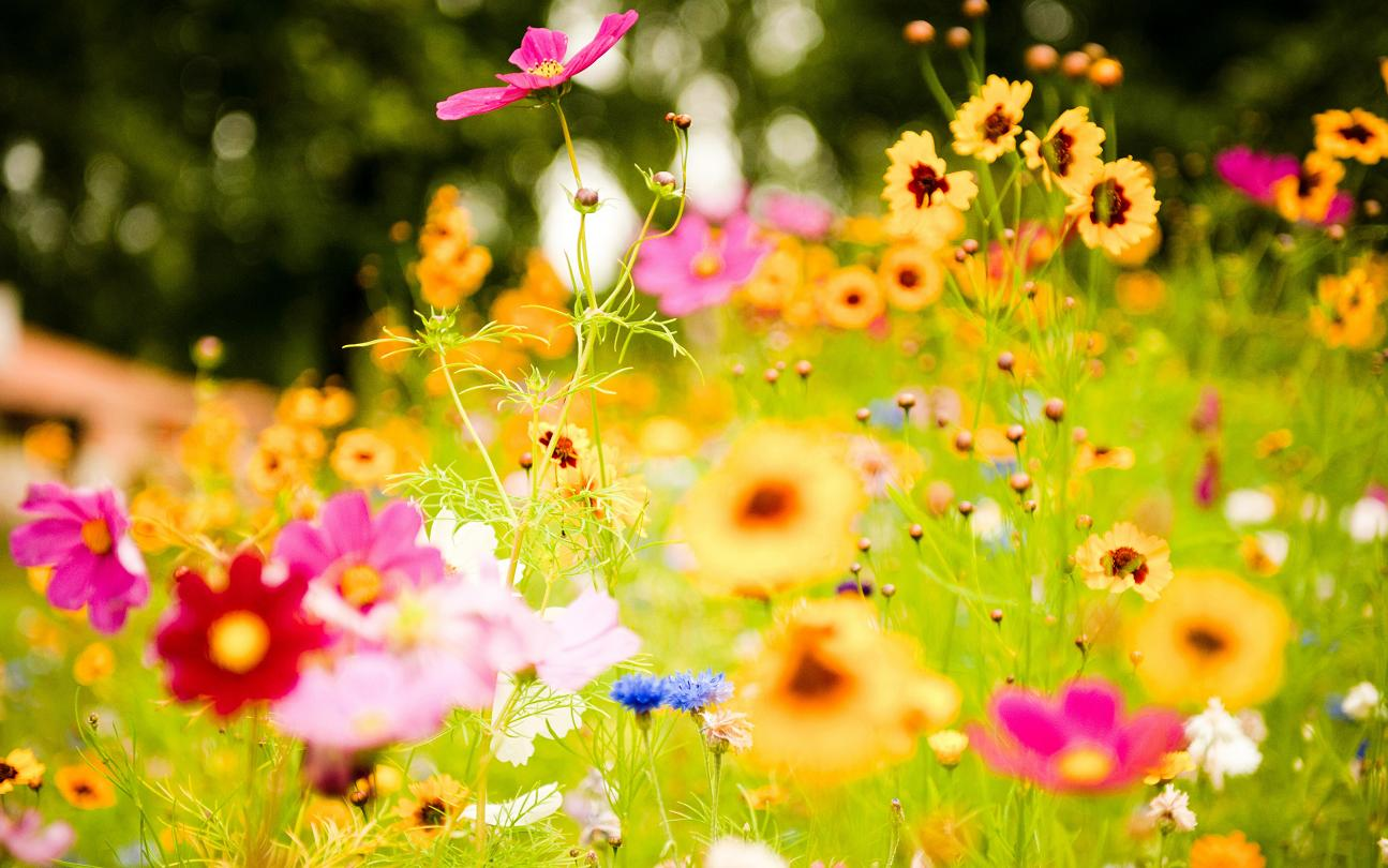 lovely flowers  birthday flowers wallpapers images free