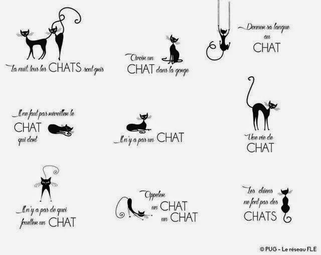 francuskie idiomy z kotami