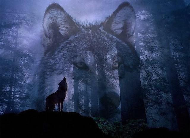 Giải mã giấc mơ thấy chó Sói & Điềm báo mơ thấy con sói
