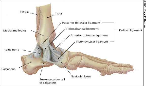 PG Medic: Ottawa ankle rules