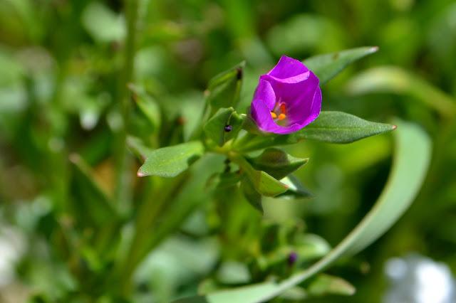 minute purple flower