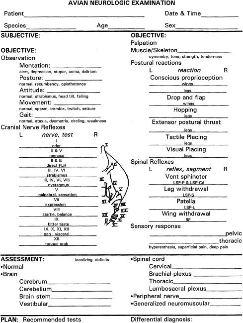 Neurological Exam Template. neurological examination from basics ...