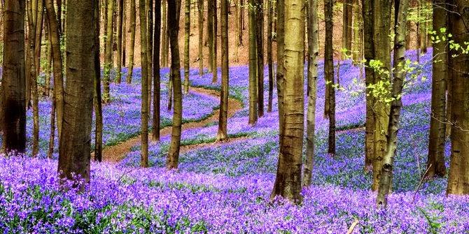Hutan Paling Indah