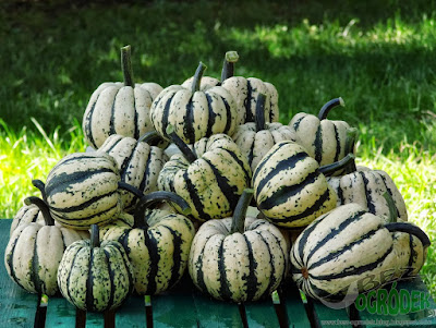 http://1.bp.blogspot.com/-UbUxaZksF04/UmWl_E6FefI/AAAAAAAACB4/08BXthXNF9g/s1600/Sweet+dumpling+(2).jpg