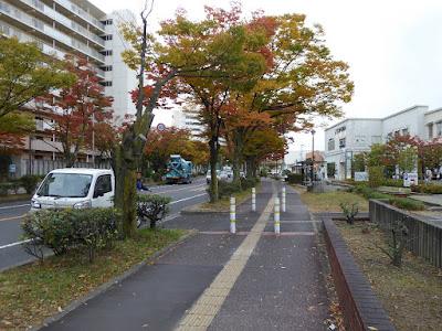 香里団地の並木(けやき通りの紅葉)