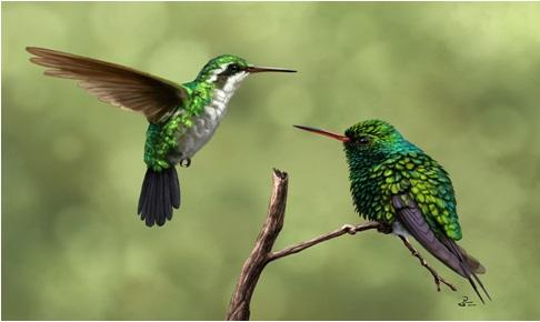 Art plume et pierre le langage de la plume - Signification des plumes d oiseaux ...