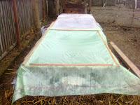 rasadnita amplasata pe platforma de gunoi cald