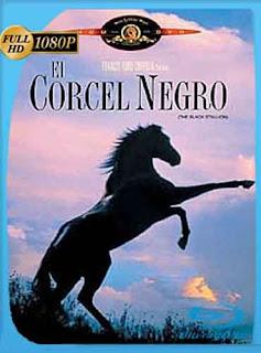 El Corcel Negro 2 1979 HD [1080p] Latino [GoogleDrive] DizonHD