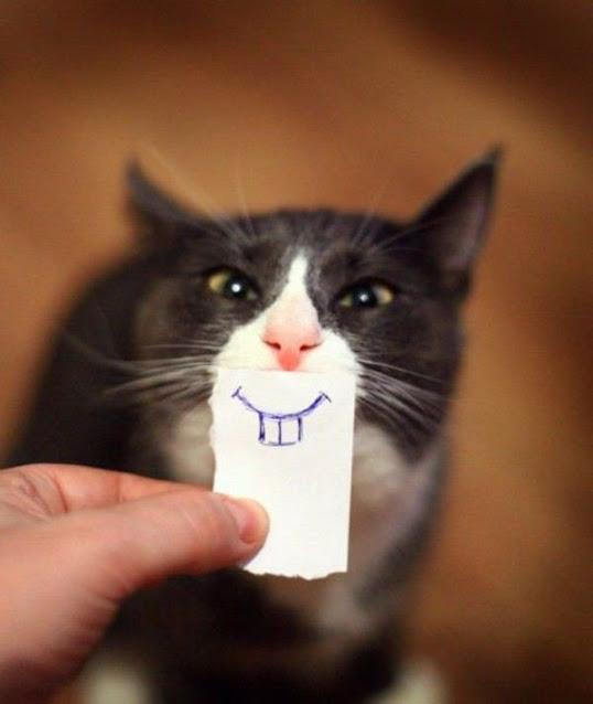 como convertir un gato en un conejo