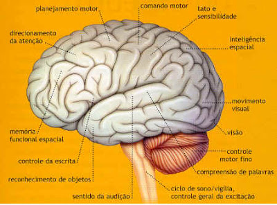 Viver bem sem parte do cérebro