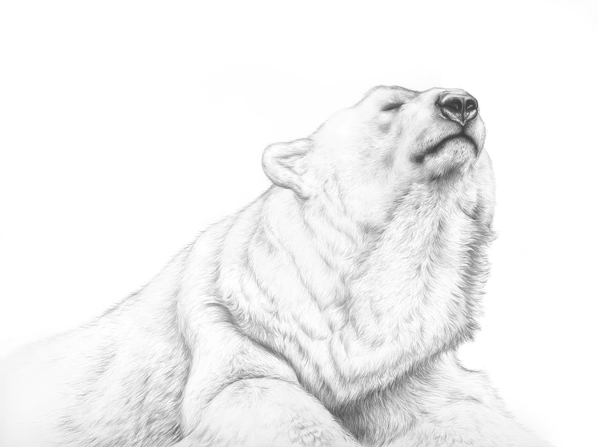 05-Polar-Bear-Jaimee-Paul-Mixed-Media-Animal-Drawings-and-Paintings-www-designstack-co