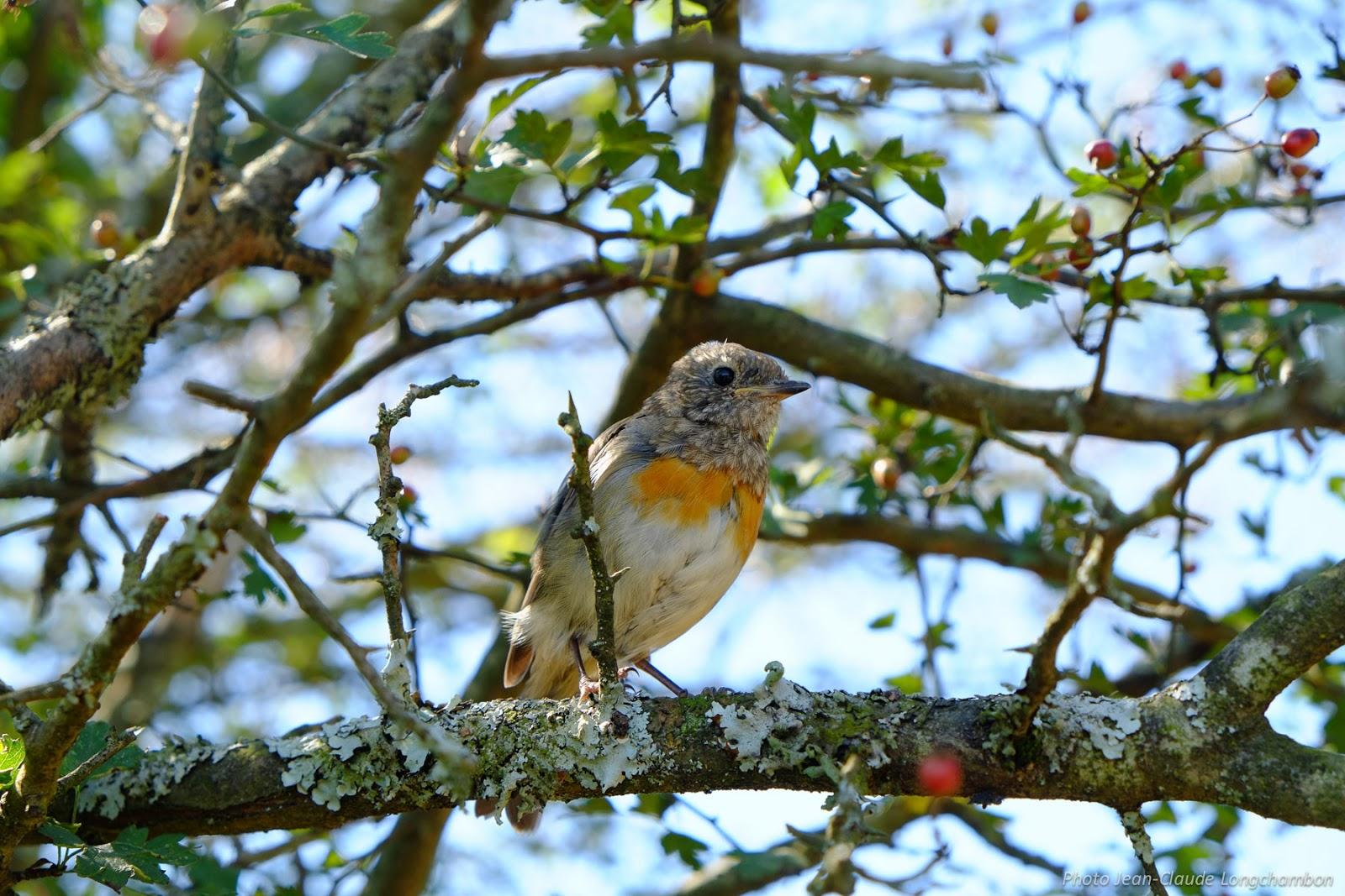 Impressions nature saint jean de luz col d 39 ibardin sare for Un petit oiseau
