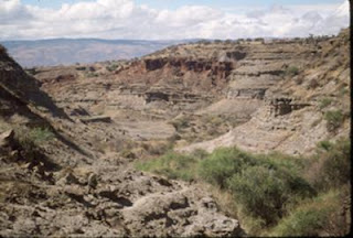 The researchers examined lake sediments from Olduvai Gorge in northern Tanzania, looking for biomarkers -- fossil molecules -- from ancient trees and grasses.