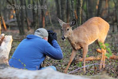 Trees animals fight wildlife deer wallpaper | (130078) |Wide Deer Wildlife