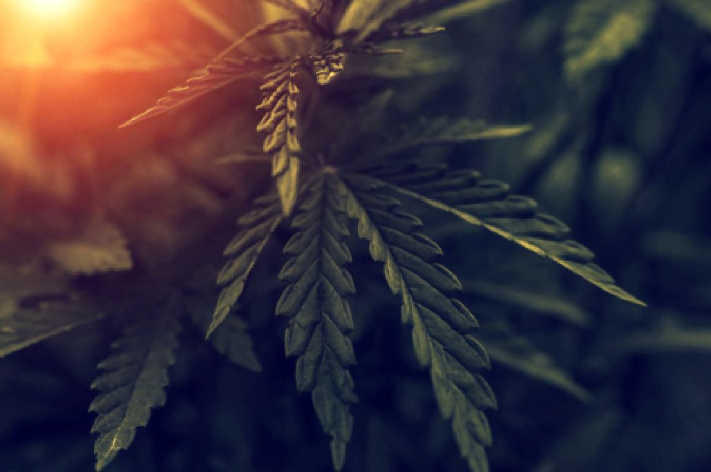 CBD Anxiety Reduction : Does CBD Actually Work?