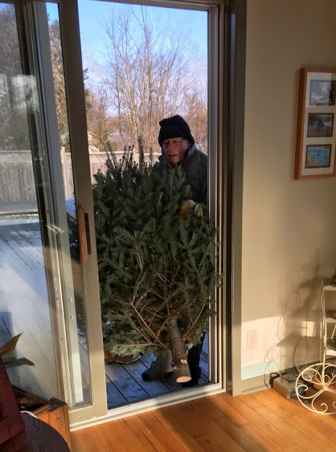 Man squeezing a Christmas tree through a door from outside