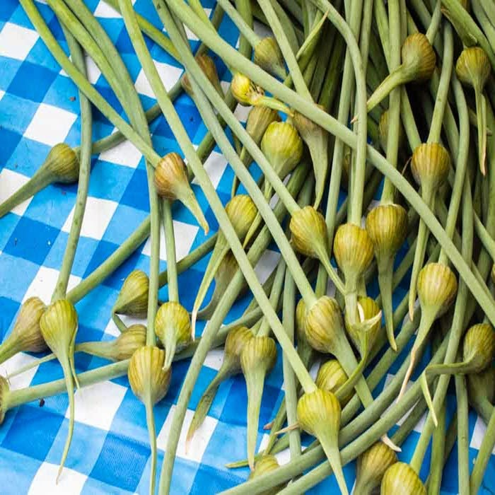 photo of garlic scapes on a blue checkered cloth, one of the recipes from the garlic scape recipe round up