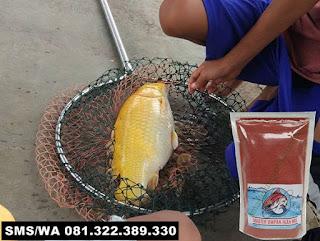 Umpan Ikan Mas Subang Khusus Di Empang