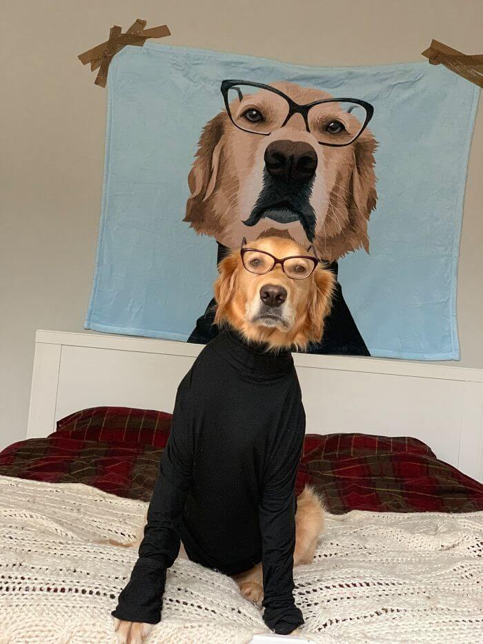 22 Hilariously Adorable Pictures Of A Dog And His Owner Dressed In Funny Costumes