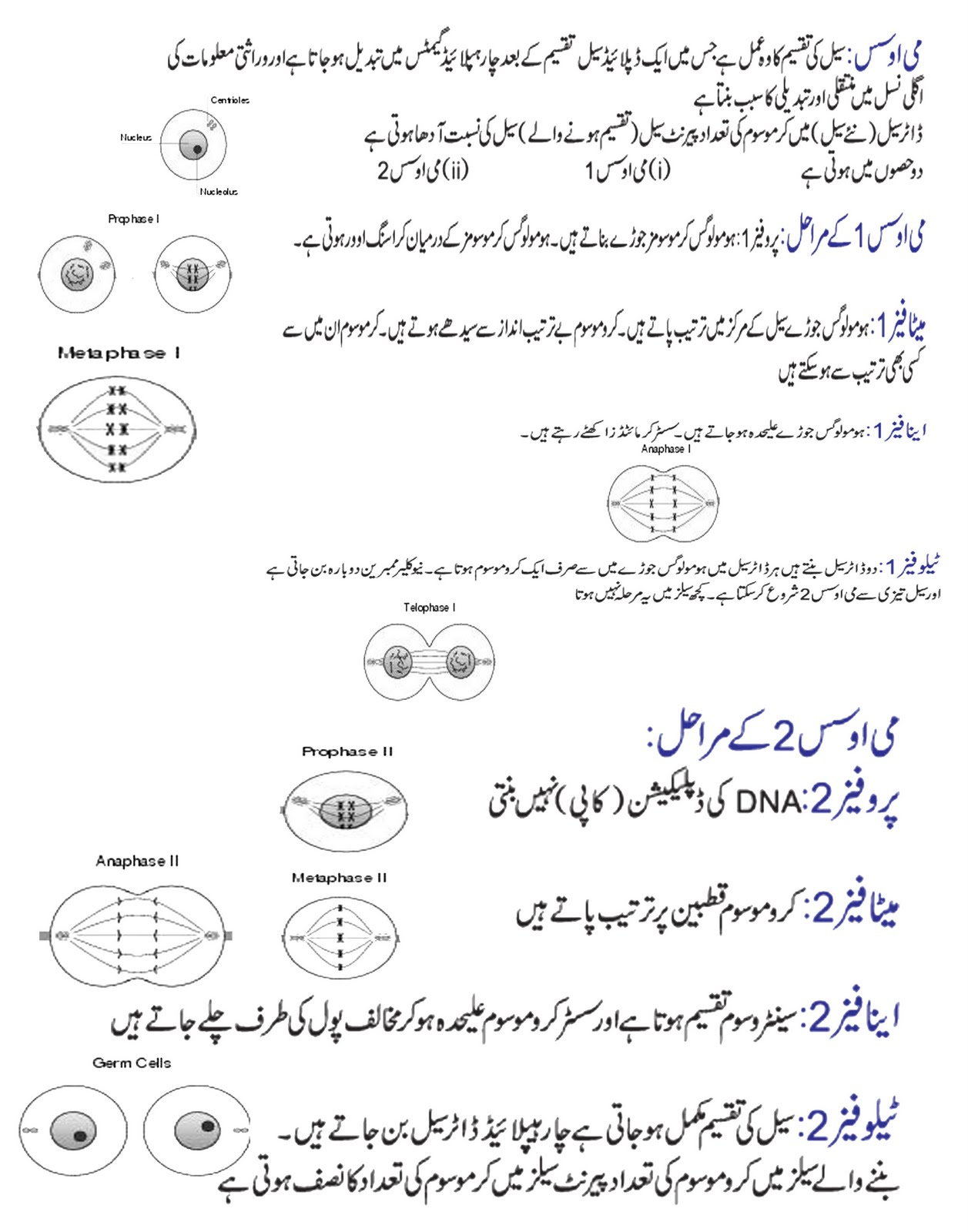 Meiosis In Urdu And English With Diagramme Online Academy