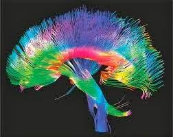 image Il cervello tra le gambe 2002 full italian movie
