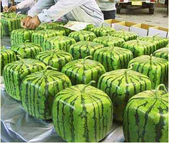 http://www.whataboutwatermelon.com/index.php/2009/07/how-and-why-square-watermelons-are-made/