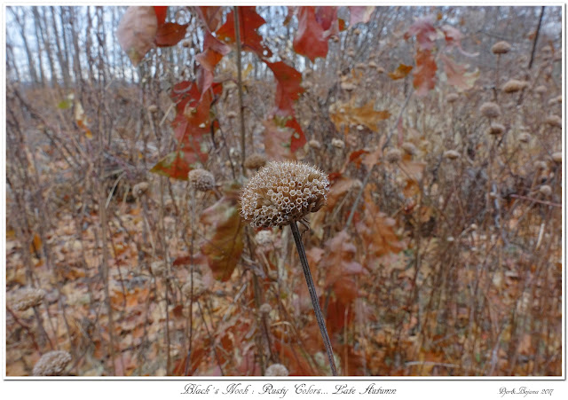 Black's Nook: Rusty Colors... Late Autumn