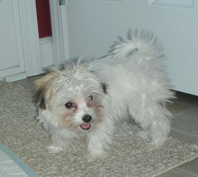 Dog Rescue Glorida