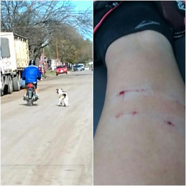 Una vez más, otra mordida de un perro suelto en la calle