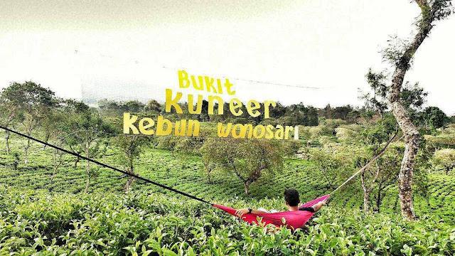 Wisata Baru di Kabupaten Malang Bukit Kuneer Kebun Teh Wonosari