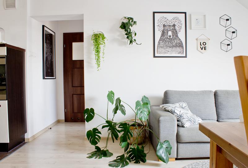 salon, szara sofa, plakat z misiem, monstera, rośliny na ścianie, doniczki ścienne, plakat z mapą, otwarta kuchnia, jasne panele na podłogę, proporczyk Pan Lis