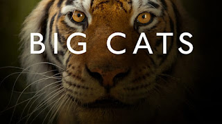 Big Cats (2018) Watch online HD Documentary Series