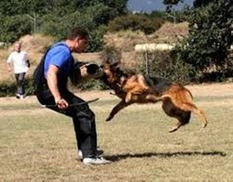 rüyada+köpek+saldırısı+görmek