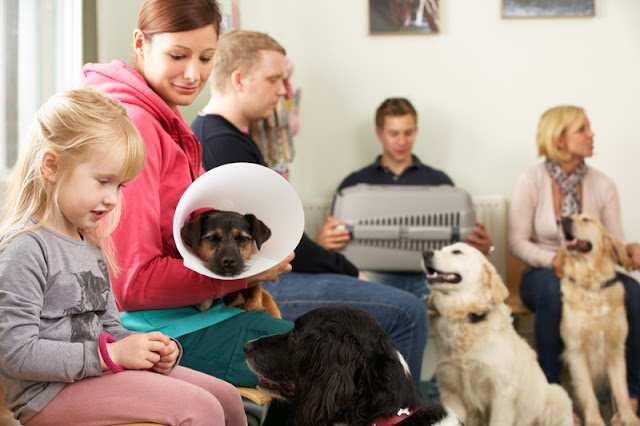 How many dogs are highly stressed at the vet, and how do we know?